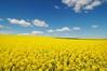 landbouw regeert hier