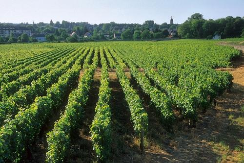 <en>The famous Burgundy vineyards</en><fr>Région Bourgogne-Franche Comté France </fr><nl>Bourgogne Regio Frankrijk</nl>