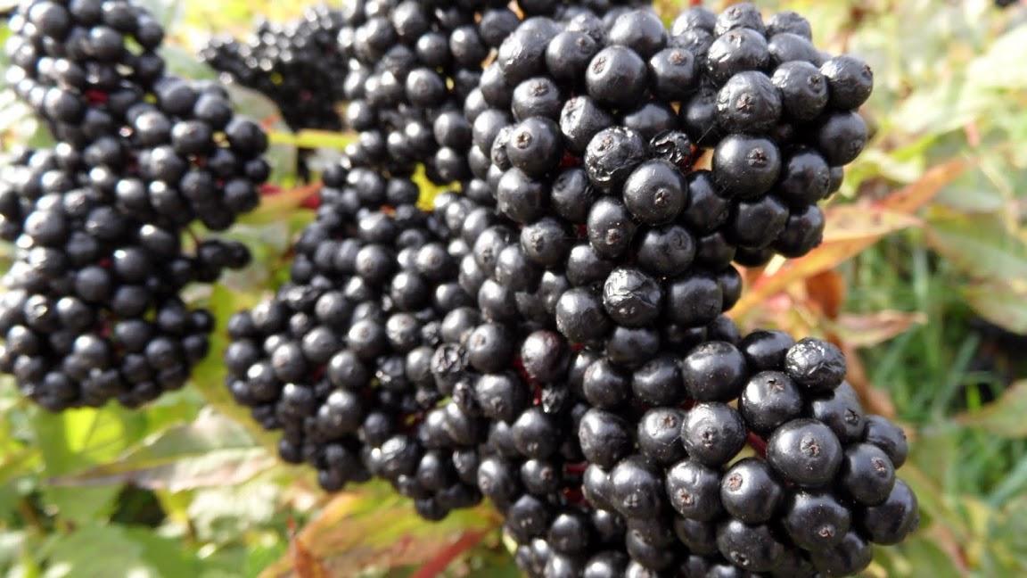 <en>Wine in the making</en><fr>Région Bourgogne-Franche Comté France </fr><nl>Bourgogne Regio Frankrijk</nl>
