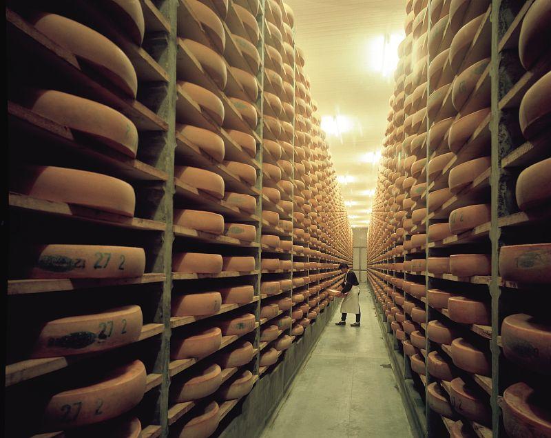 <en>The famous comté cheese</en><fr>Le célèbre fromage : Comté</fr>
