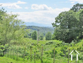 Domain 195ha with 2 houses, outbuildings, source... Ref # MP9052 foto 5